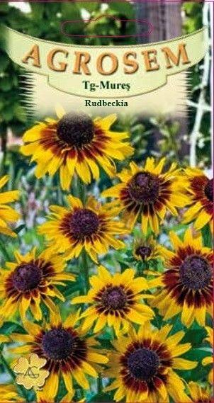Seminte de Rudbeckia - AS - Rudbeckia hirta