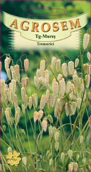 Seminte de Tremurici - AS - Briza maxima