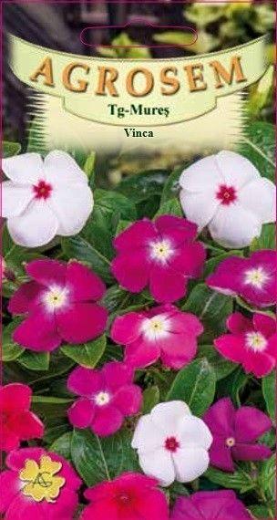 Seminte de Vinca mix - AS - Catharanthus roseus