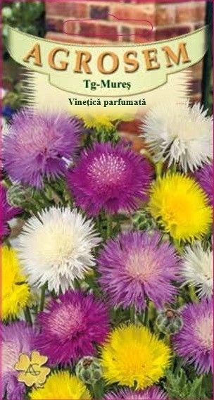 Seminte de Vinetica parfumata mix - AS - Centaurea imperialis