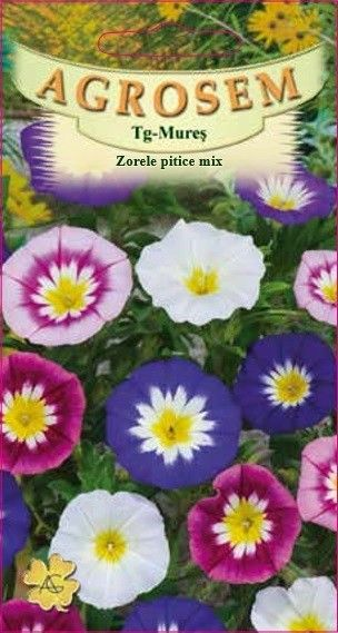 Seminte de Zorele pitice mix - AS - Convolvulus tricolor
