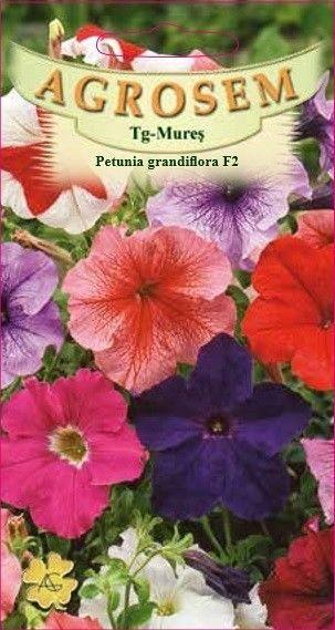 Seminte de Petunia grandiflora F2 - AS - Petunia x hybrida grandiflora