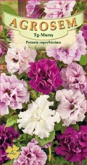 Seminte de Petunia superbissima - AS - Petunia x hybrida superbissima