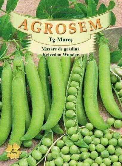 Seminte de Mazare de gradina Kelvedon Wonder 500 g - AS - Pisum sativum
