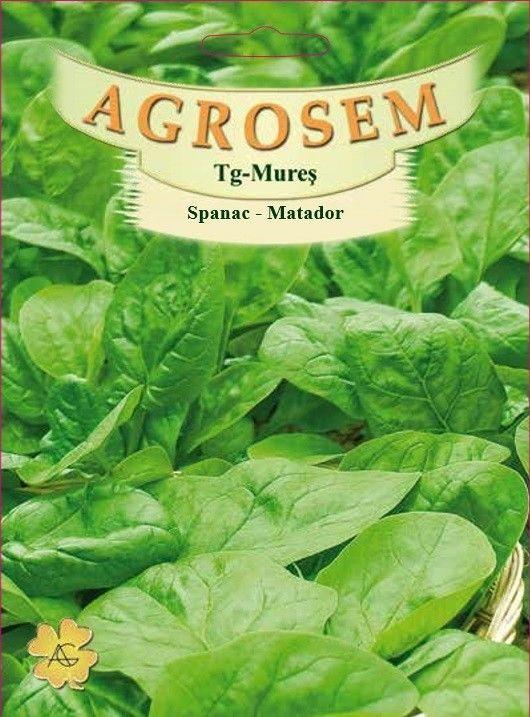 Seminte de Spanac Matador 100 g - AS - Spinacia oleracea