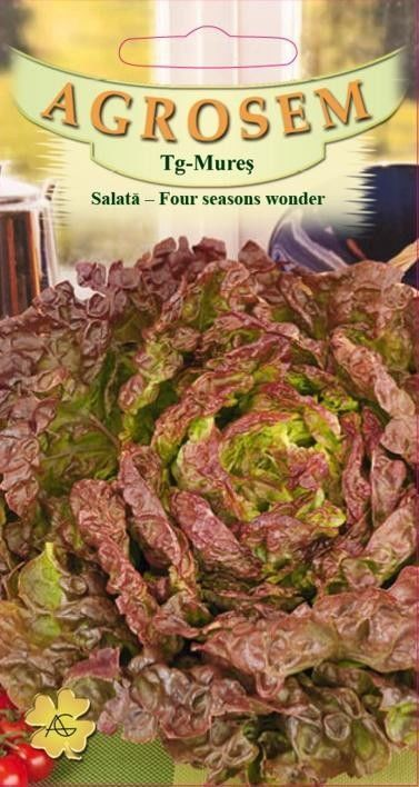 Seminte de Salata 4 anotimpuri Four seasons wonder - AS - Lactuca sativa