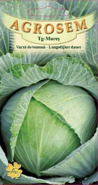 Seminte de Varza de toamna  Langedijker dauer - AS - Brassica oleracea var. capitata