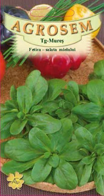 Seminte de Fetica - AS - Valerianella locusta