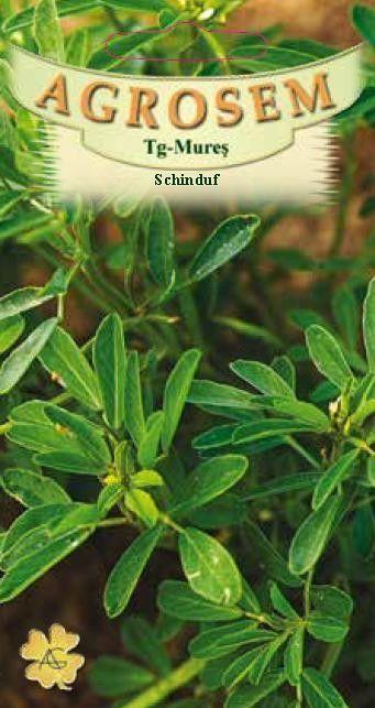 Seminte de Schinduf - AS - Trigonella foenum graecum