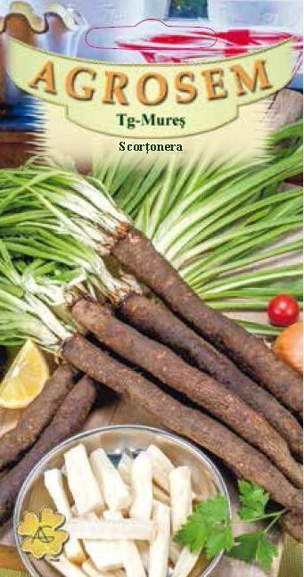 Seminte de Scortonera - AS - Scorzonera hispanica