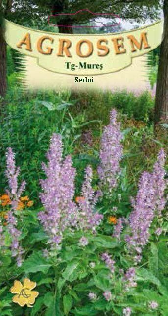 Seminte de Serlai - iarba Sfantului Ion - AS - Salvia sclarea