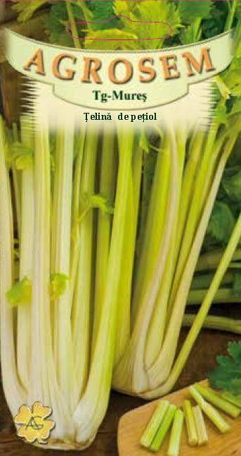 Seminte de Telina de petiol - AS - Apium graveolens ssp dulce