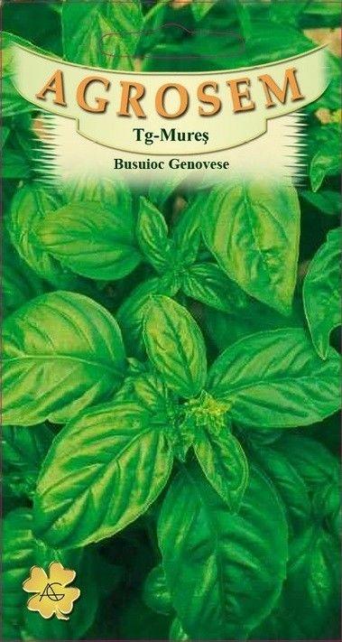 Seminte de Busuioc Genovese - BigPack - AS - Ocimum basilicum