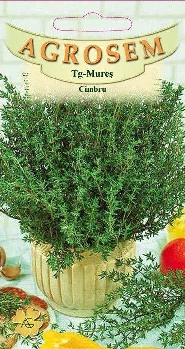 Seminte de Cimbru - BigPack - AS - Satureja hortensis