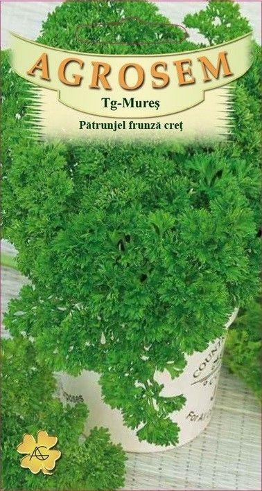 Seminte de Patrunjel cret Moss Curled - BigPack - AS - Petroselinum crispum