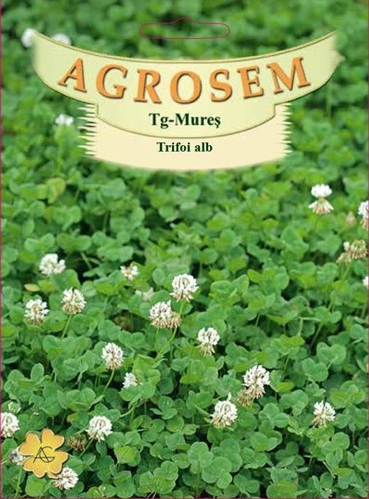Seminte de Trifoi alb 500g - Trifolium repens