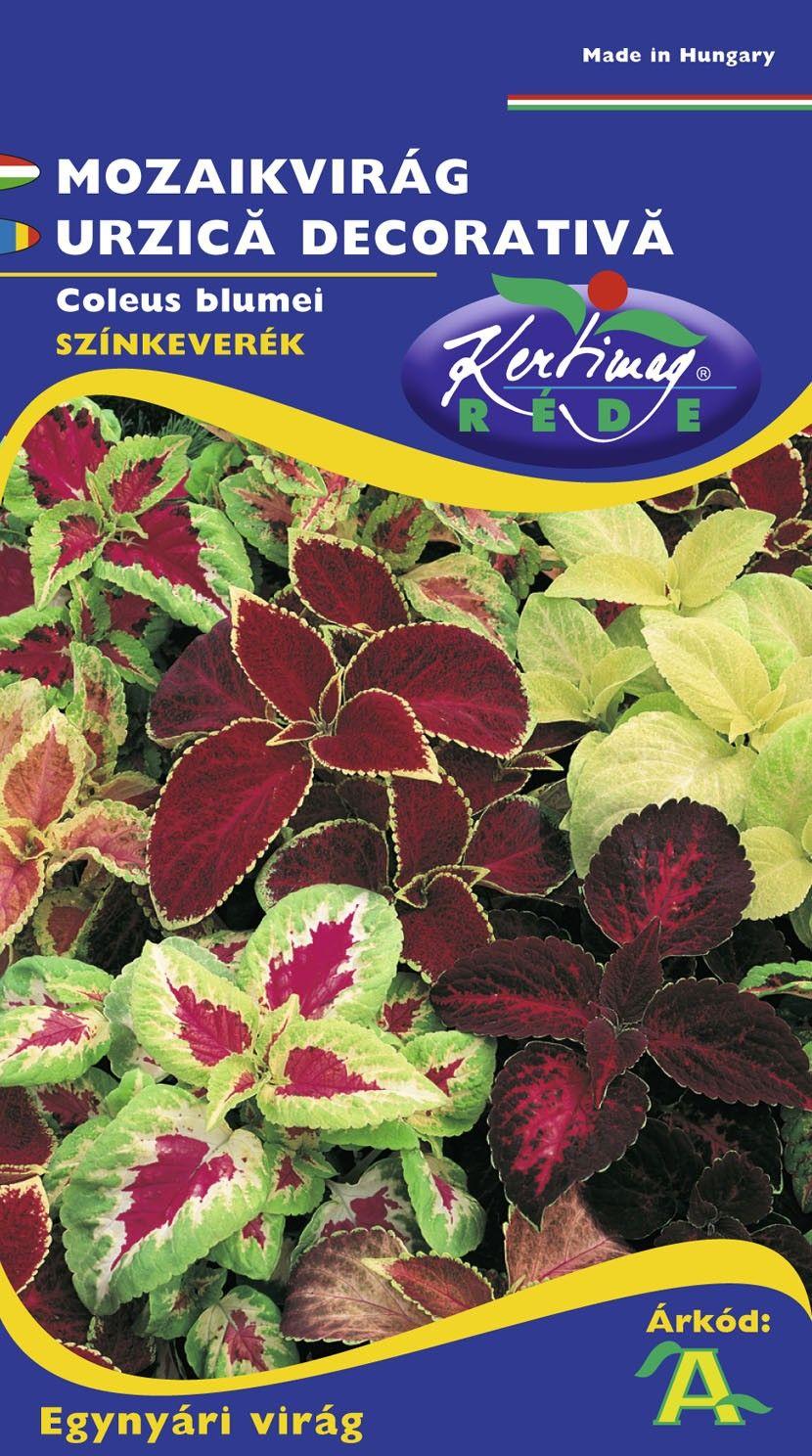 Seminte de Urzica decorativa mix - KM - Coleus blumei