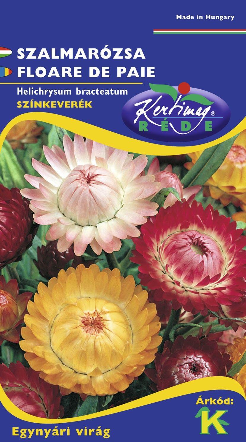 Seminte de Flori de paie mix - KM - Helichrysum bracteatum