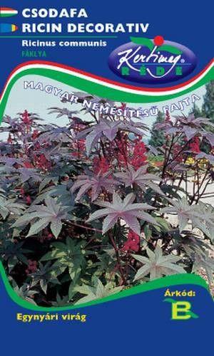 Seminte de Ricin - KM - Ricinus communis