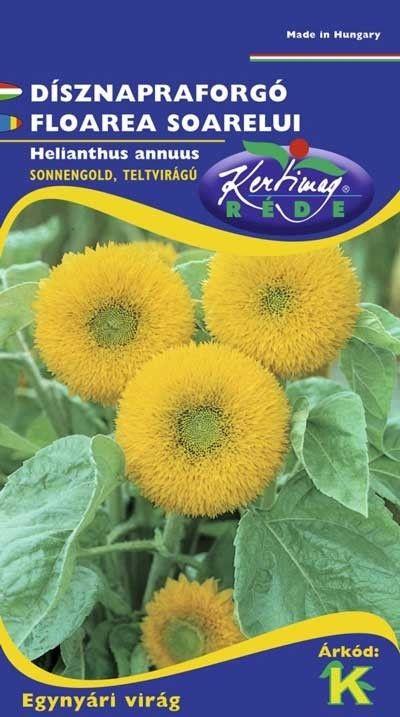 Seminte de Floarea soarelui dubla inalta Sonnengold 2 - KM - Helianthus annuus