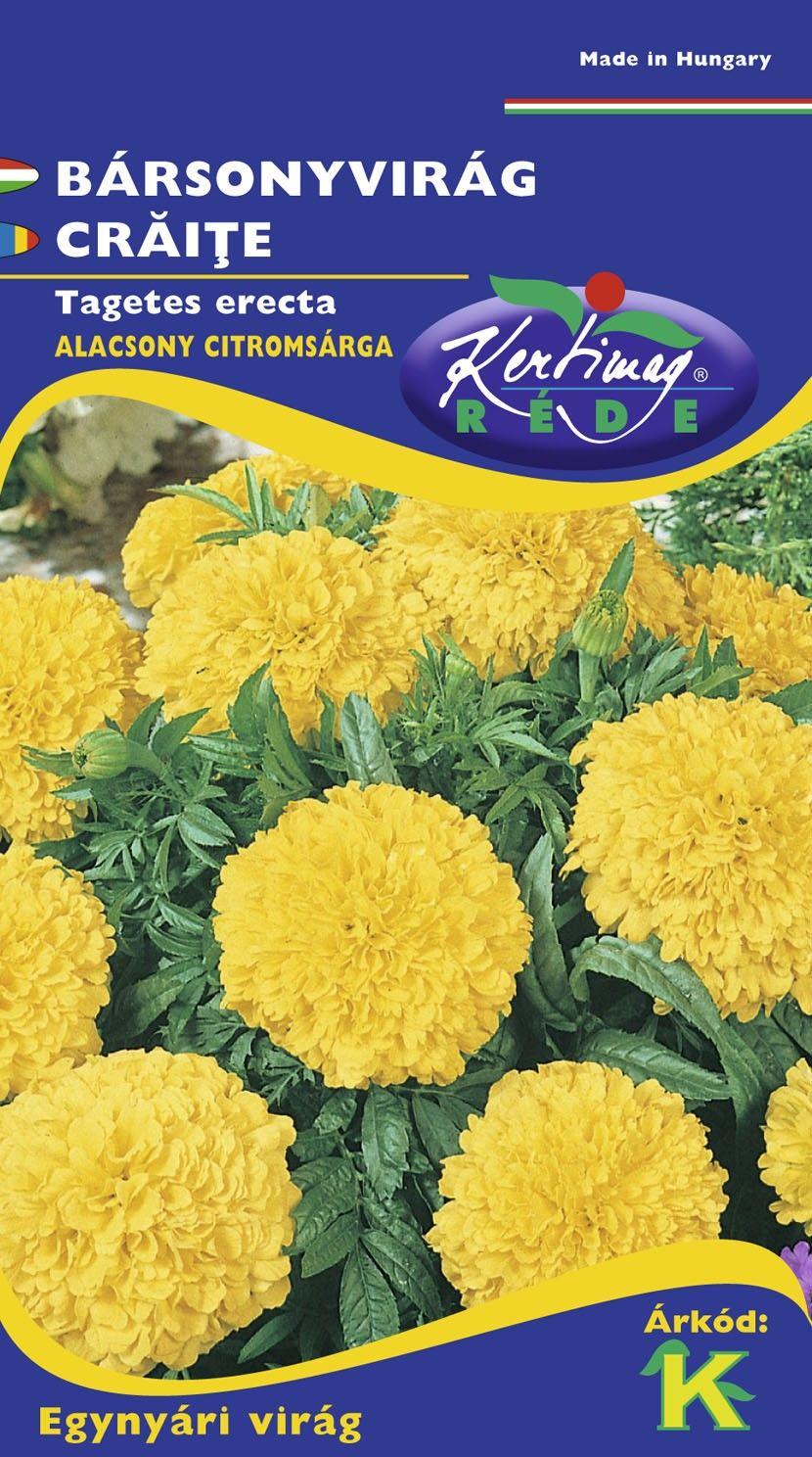 Seminte de Craite duble pitice Yellow - KM - Tagetes erecta