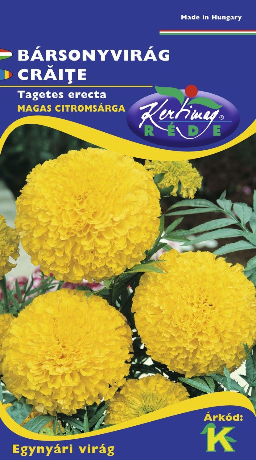 Seminte de Craite duble inalte Yellow - KM - Tagetes erecta