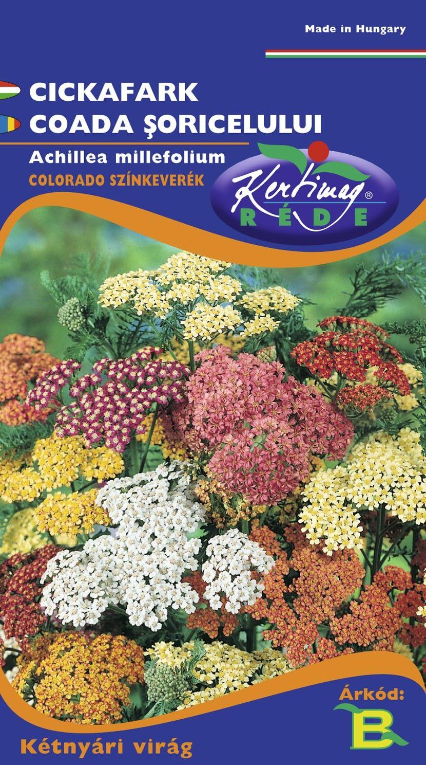 Seminte de Coada soricelului Colorado mix - KM - Achillea millefolium