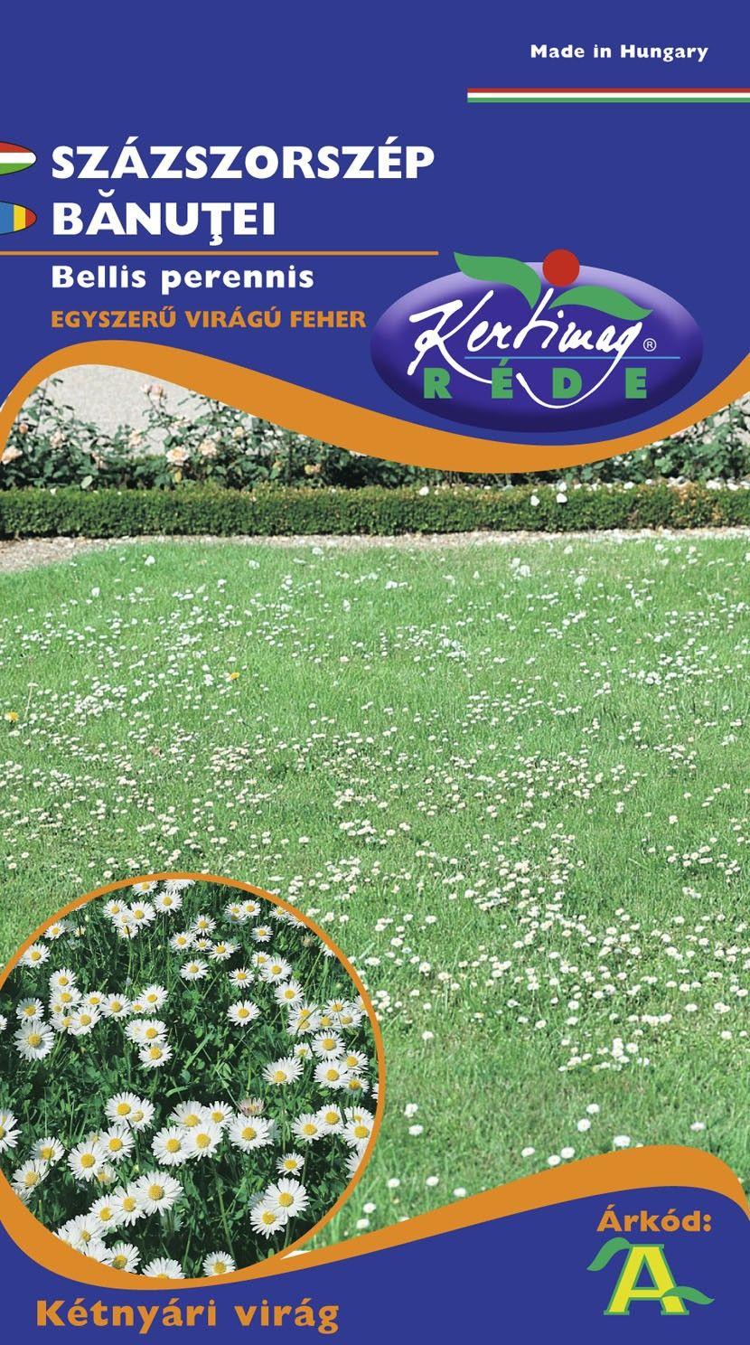Seminte de Banutei flori simple - KM - Bellis perennis