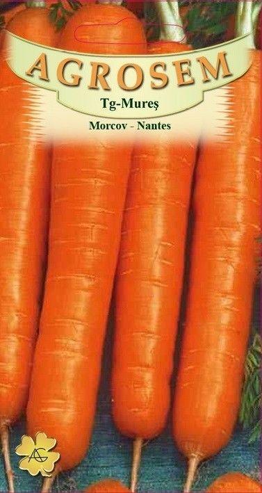 Seminte de Morcovi Nantes 500g - AS - Daucus carota