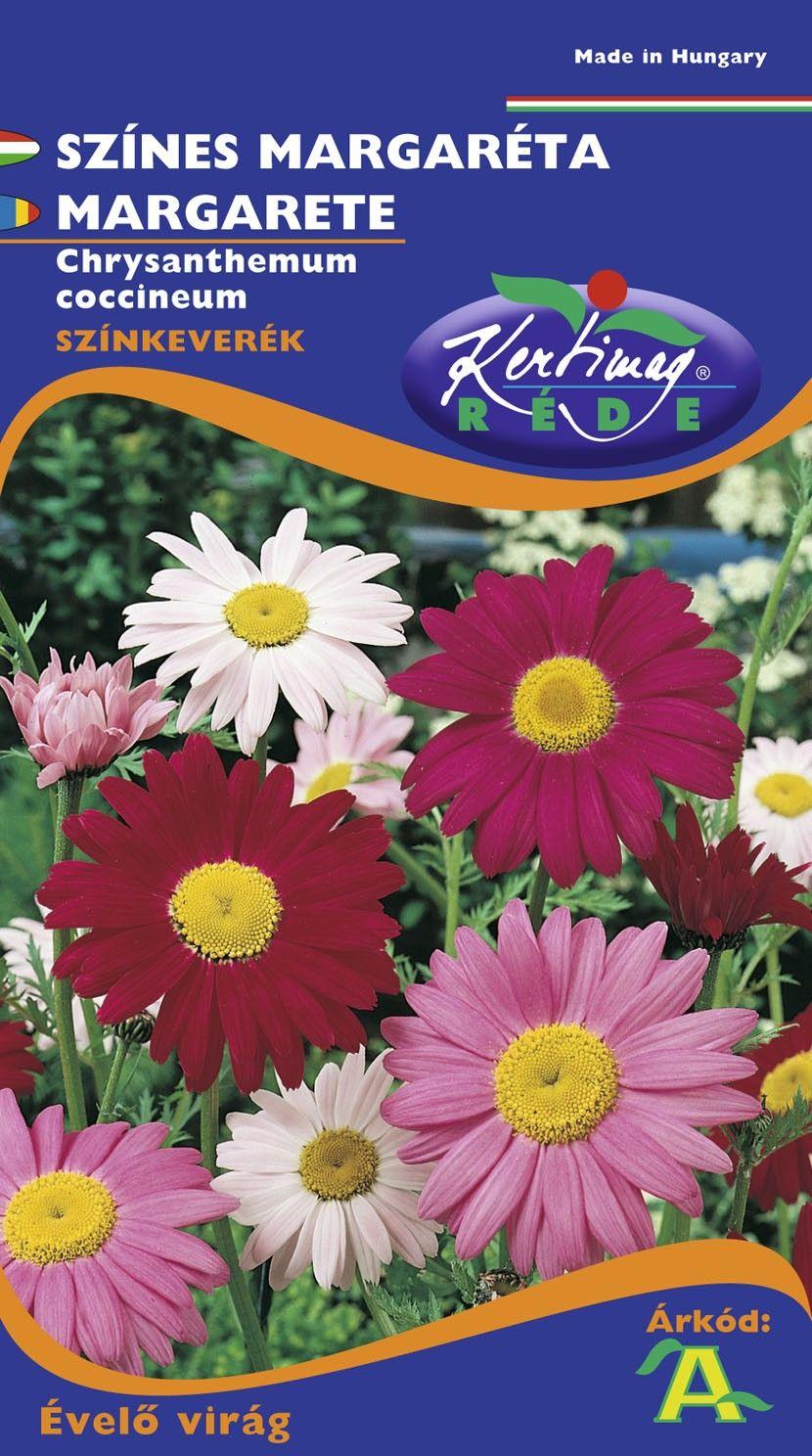 Seminte de Margarete mix - KM - Chrysanthemum coccineum