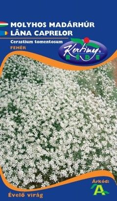 Seminte de Lana caprelor - KM - Cerastium tomentosum
