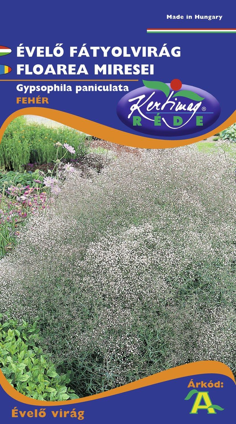 Seminte de Floarea miresei - KM - Gypsophyla paniculata