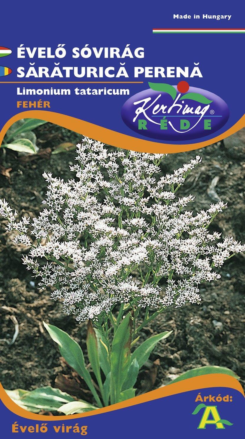 Seminte de Saraturica perena - KM - Limonium tataricum