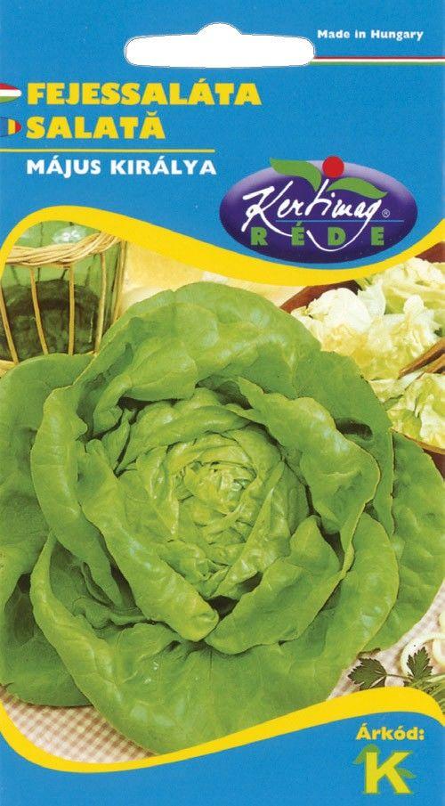 Seminte de Salata May King - KM - Lactuca sativa var. capitata