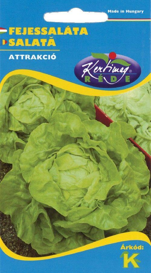 Seminte de Salata Atractie - KM - Lactuca sativa var. capitata