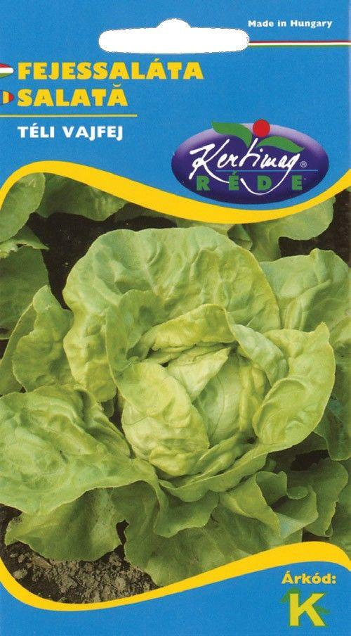 Seminte de Salata Winter Butterkopf - KM - Lactuca sativa var. capitata