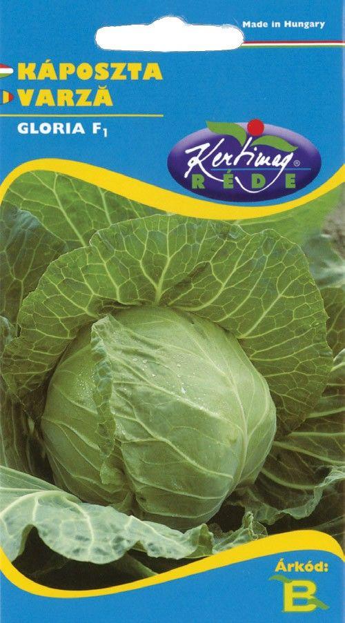 Seminte de Varza Gloria F1 - KM - Brassica oleracea convar capitata provar. capitata
