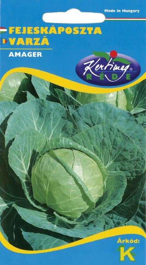 Seminte de Varza Amager - KM - Brassica oleracea convar capitata provar. capitata