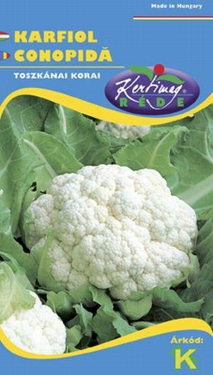 Seminte de Conopida Toscano precoce - KM - Brassica cretica convar botrytis