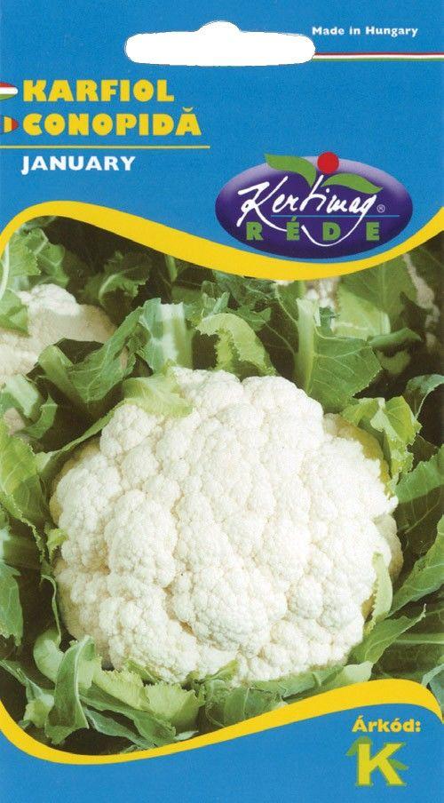 Seminte de Conopida January - KM - Brassica cretica convar botrytis
