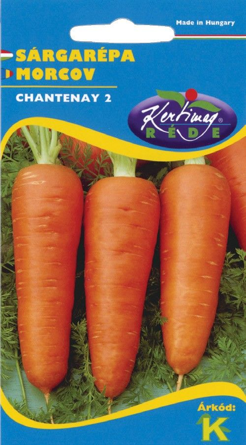 Seminte de Morcovi Chantenay - KM - Daucus carota spp. sativus