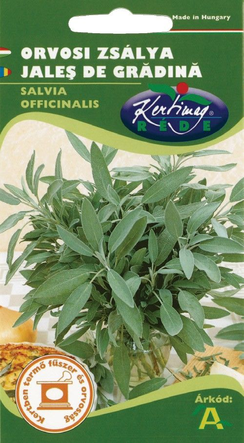 Seminte de Jales de gradina - KM - Salvia officinalis