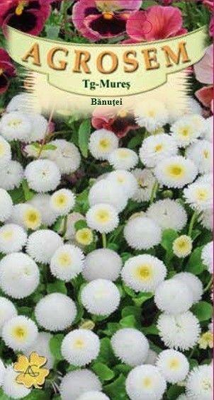 Seminte de Banutei alb - AS - Bellis perenis