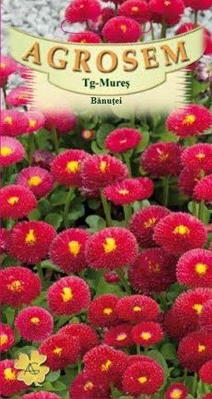 Seminte de Banutei rosii - AS - Bellis perenis