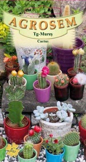 Seminte de Cactus mix - AS - Cactus species