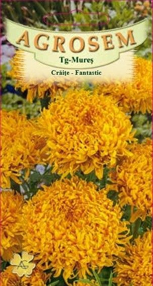 Seminte de Craite Fantastic Golden Yellow - AS - Tagetes erecta