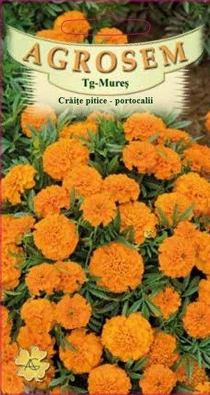 Seminte de Craite pitice portocalii - AS - Tagetes patula nana
