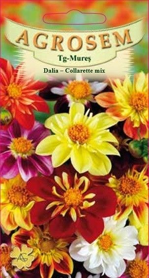 Seminte de Dalia - Collarette mix - AS - Dahlia variabilis