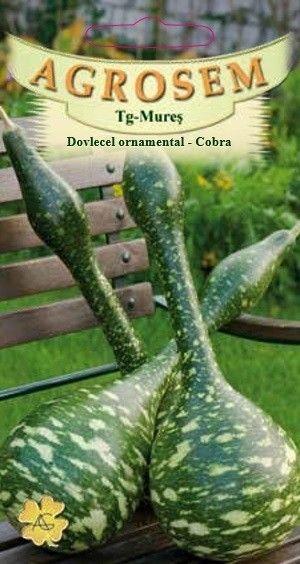 Seminte de Dovlecel ornamental Cobra - AS - Lagenaria siceraria