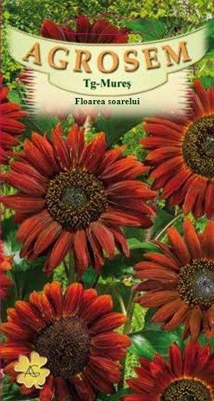 Seminte de Floarea soarelui rosie Evening Sun - AS - Helianthus annuus